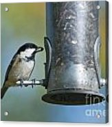 Coal Tit On Feeder Acrylic Print