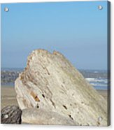 Coastal Art Prints Driftwood Ocean Beach Sky Acrylic Print by Baslee Troutman