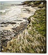 Coastal Grass Acrylic Print
