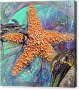 Coastal Life I Acrylic Print