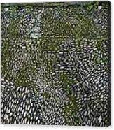 Cobblestone Acrylic Print