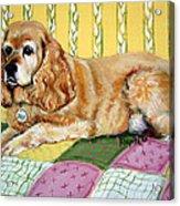 Cocker Spaniel On Quilt Acrylic Print