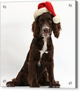 Cocker Spaniel With Santa Hat Acrylic Print