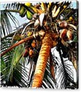 Cocoanuts Squared Acrylic Print