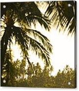 Coconut Palm Trees On The Coast Acrylic Print