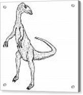 Coelophysis - Dinosaur Acrylic Print