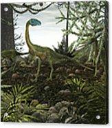 Coelophysis Dinosaurs Walk Amongst Acrylic Print