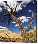 Cohab Canyon Overlook Acrylic Print