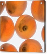 Coho Salmon Oncorhynchus Kisutch Eggs Acrylic Print
