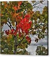 Cold Autumn Breeze  Acrylic Print