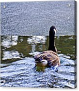 Cold Swim In The Pond Acrylic Print