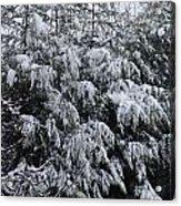 Cold Winter Snow Acrylic Print