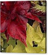 Coleus And Other Plants In A Window Box Acrylic Print