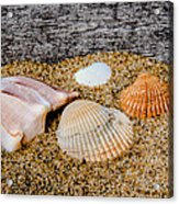 Collection Of Shells Acrylic Print