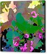 Color 116 Acrylic Print