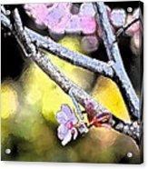 Color 62 Acrylic Print