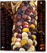 Color Corn Acrylic Print