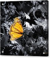 Color Me Beautiful Acrylic Print