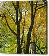 Color Me Yellow Acrylic Print