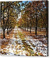 Color Play Acrylic Print