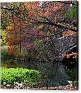 Color Splash In Central Park Acrylic Print
