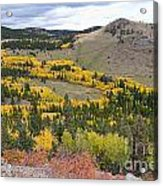 Colorado Autumn Aspens Colors Acrylic Print