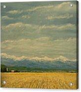 Colorado Corn Field Acrylic Print