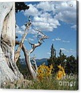 Colorado Hillside Acrylic Print
