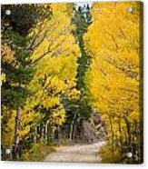 Colorado Rocky Mountain Aspen Road Portrait  Acrylic Print