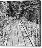 Colorado Rocky Mountain Forest Path Bw Acrylic Print