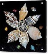 Colored Seashells Acrylic Print