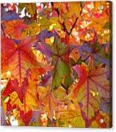 Colorful Autumn Leaves Art Prints Trees Acrylic Print