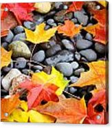 Colorful Autumn Leaves Prints Rocks Acrylic Print