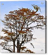 Colorful Cypress Acrylic Print