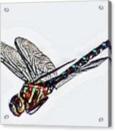 Colorful Dragon Acrylic Print