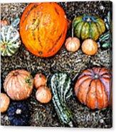 Colorful Fall Harvest Acrylic Print