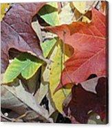 Colorful Fall Leaves Acrylic Print