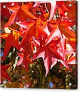 Colorful Fall Tree Red Leaves Art Prints Acrylic Print