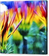 Colorful Flowers Together Acrylic Print