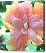 Colorful Hibiscus Acrylic Print by Karen Nicholson