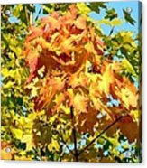Colorful Leaf Cluster Acrylic Print