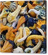 Colorful Mix Of Gords Acrylic Print