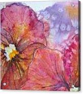Colorful Pansies Acrylic Print