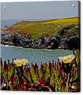 Colorful Point Acrylic Print