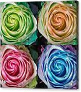 Colorful Rose Spirals Acrylic Print