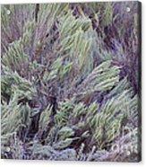 Colorful Sagebrush Acrylic Print