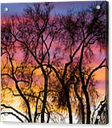 Colorful Silhouetted Trees 26 Acrylic Print