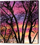 Colorful Silhouetted Trees 33 Acrylic Print