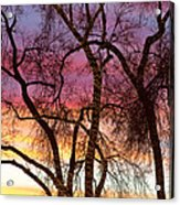 Colorful Silhouetted Trees 37 Acrylic Print