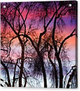 Colorful Silhouetted Trees 9 Acrylic Print